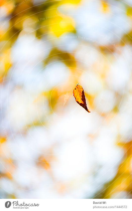 Die Tage werden kürzer Kunst Kunstwerk Umwelt Natur Landschaft Pflanze Himmel Sonne Sonnenlicht Herbst Winter Klimawandel Wetter Schönes Wetter Wind Sturm Blatt