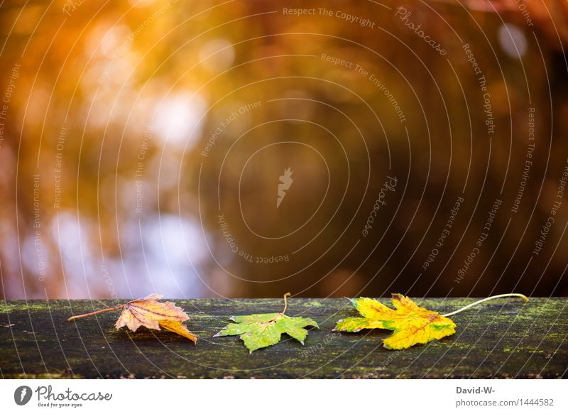Herbstfärbung Kunst Kunstwerk Umwelt Natur Landschaft Pflanze Sonnenlicht Winter Klima Schönes Wetter Blatt Grünpflanze Park Wald liegen Ordnung herbstlich