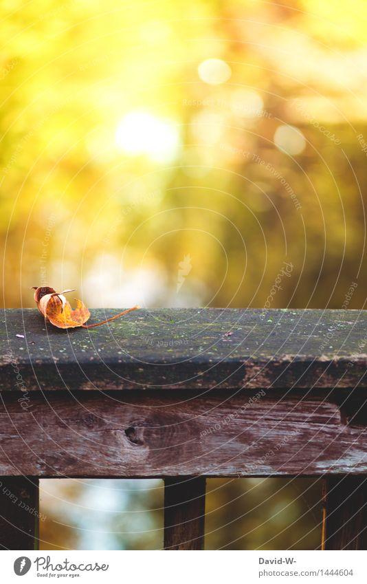 die Tage sind gezählt Natur Pflanze schön Sonne Landschaft Blatt Winter Wald Umwelt Herbst Kunst Park leuchten Klima Brücke Schönes Wetter