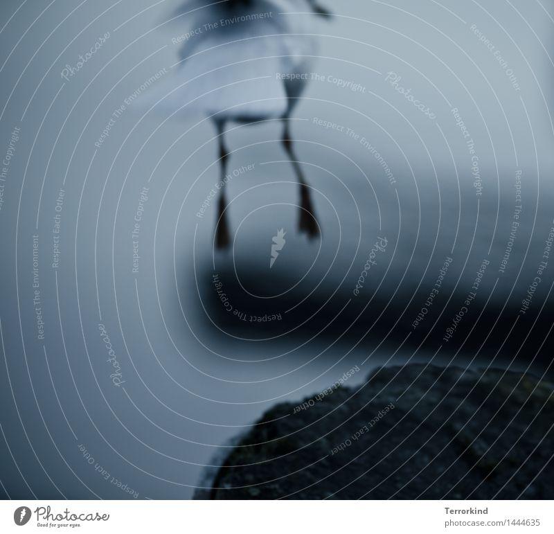 a.little.off fliegen Vogel gehen frei Tierfuß Beginn Abheben Möwe fliegend Vogelflug Krallen losgehen