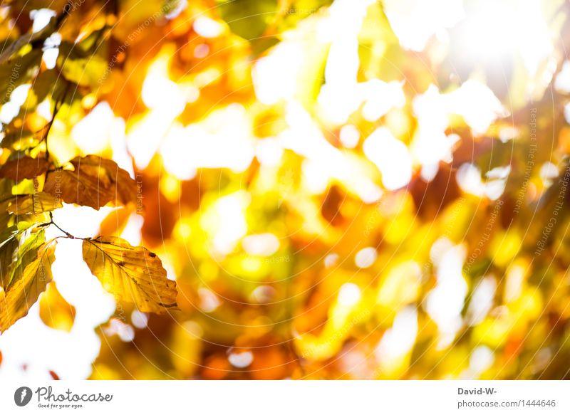 goldgelb Kunst Kunstwerk Umwelt Natur Landschaft Pflanze Luft Sonne Sonnenaufgang Sonnenuntergang Sonnenlicht Herbst Winter Klima Wetter Schönes Wetter Baum