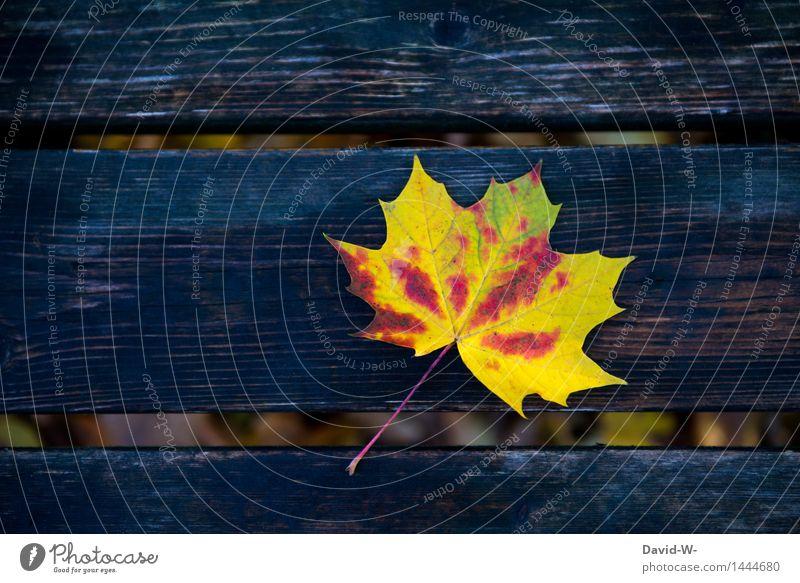 ein kleines Kunstwerk Umwelt Natur Landschaft Herbst Klima Klimawandel Schönes Wetter schlechtes Wetter Wind Blatt Wald liegen Bank Holzbrett mehrfarbig schön