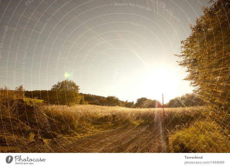 irgendwann.in.Bad.Kissingen Natur Sommer Sonne Baum Wärme Wege & Pfade Beleuchtung Hügel Kies