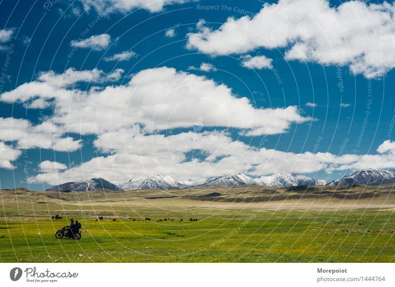 Motorrad vor und Kühe grasen auf dem Feld vor den Hügeln Kuh Hügelseite Hügelige Landschaft Nomade Altai Natur grün Gras Sommer Bauernhof Weide Rind Wiese