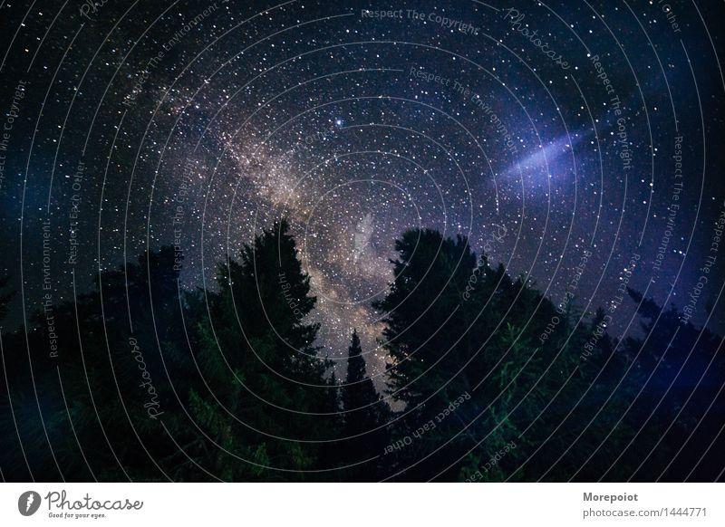 Milchstraße hinter dem Wald Landschaft Horizont Nacht Nachtaufnahme Nachthimmel Nachtfotografie Wolken Wolkenhimmel Wolkenlandschaft Stern Sternenhimmel