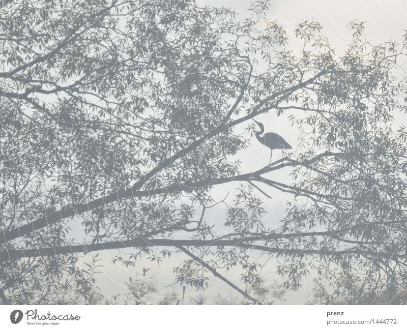 Reiher-Struktur Umwelt Natur Landschaft Tier Baum Wildtier Vogel 1 grau Graureiher sitzen Ast Weide Farbfoto Außenaufnahme Strukturen & Formen Menschenleer Tag