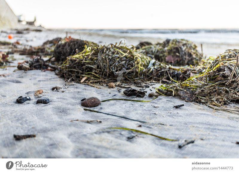 algen Natur Landschaft Wolkenloser Himmel Herbst Pflanze Algen Ostsee Horizont Langeweile Umwelt Wellness Mecklenburg-Vorpommern Rostock Heiligendamm Nienhagen