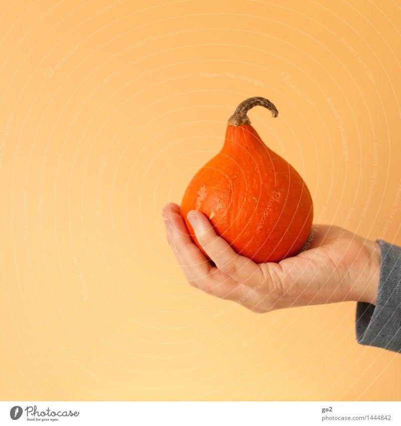 Kürbis Lebensmittel Gemüse Kürbisgewächse Kürbiszeit Ernährung Essen Bioprodukte Vegetarische Ernährung Mensch Hand Finger 1 Natur Herbst festhalten ästhetisch
