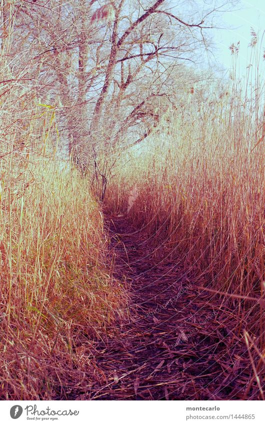 mittendrin.... Umwelt Natur Pflanze Urelemente Erde Himmel Wolkenloser Himmel Schönes Wetter Baum Gras Sträucher Blatt Grünpflanze Wildpflanze Schilfrohr