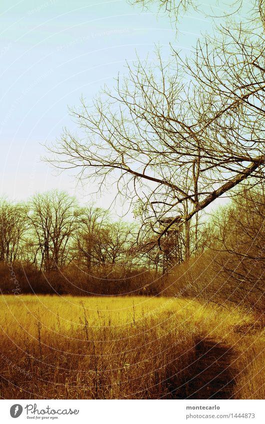 weg zum turm Landschaft Pflanze Erde Luft Himmel Herbst Baum Sträucher Grünpflanze Wildpflanze Schilfrohr Seeufer Naturschutzgebiet Aussichtsturm Wege & Pfade