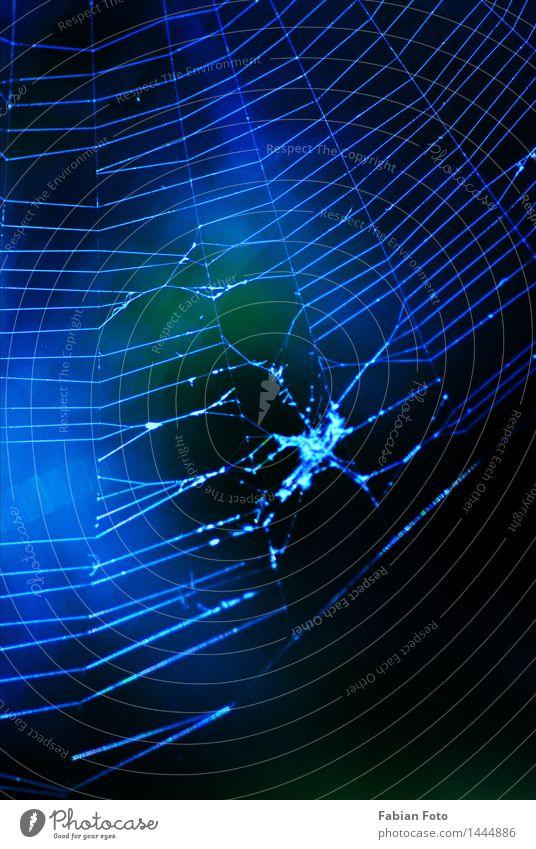 Netz Natur Sommer Spinnennetz blau bläulich Farbfoto Außenaufnahme Detailaufnahme abstrakt Muster Strukturen & Formen Abend Dämmerung Nacht Silhouette