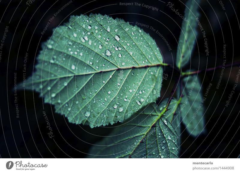 green Natur Pflanze grün Wasser Blatt dunkel schwarz kalt Umwelt natürlich klein authentisch Wassertropfen Spitze nass einfach