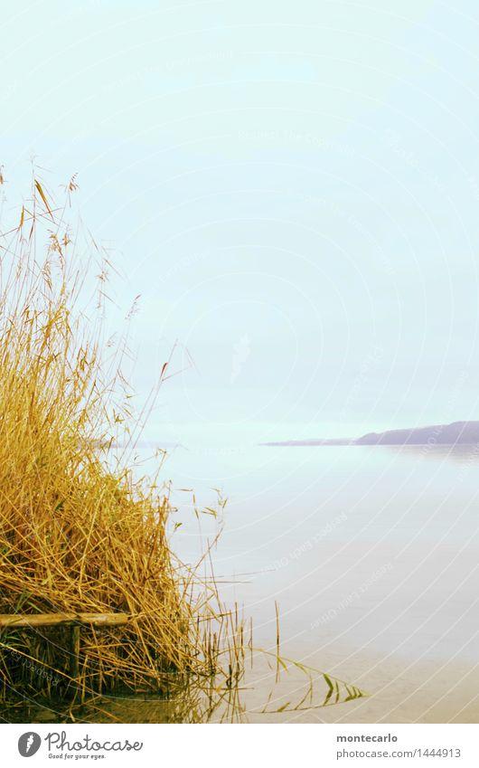 weitsicht Umwelt Natur Luft Wasser Himmel Wolken Horizont Herbst Klima Wetter Schönes Wetter Pflanze Gras Sträucher Grünpflanze Wildpflanze Schilfrohr Seeufer