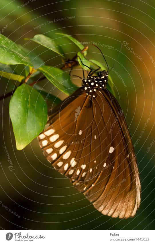 The Butterfly Natur Tier Schmetterling Flügel 1 Umwelt Umweltschutz Makro Makroaufnahme Insekt Farbfoto Innenaufnahme Nahaufnahme Detailaufnahme