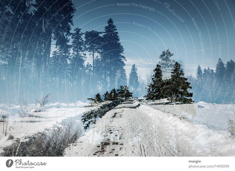 Winter- Traum- Straße Himmel Natur Ferien & Urlaub & Reisen Pflanze blau grün Baum Landschaft Tier Wald Umwelt Schnee Schneefall Tourismus