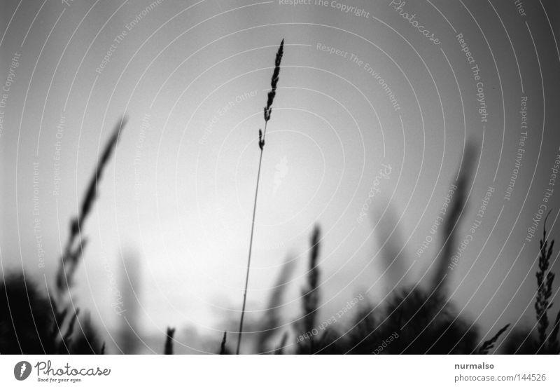 Traum in Grau III Himmel Natur weiß schwarz Gefühle Gras Wege & Pfade grau Blüte träumen Stimmung Feld liegen geschlossen Bett Bauernhof