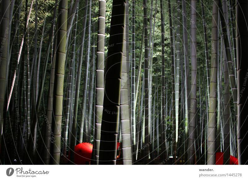 Bambushain mit Schirmen und Beleuchtung, Japan Natur Pflanze Sommer Baum Erholung ruhig Wald Herbst Kunst Garten Park Dekoration & Verzierung ästhetisch Kultur