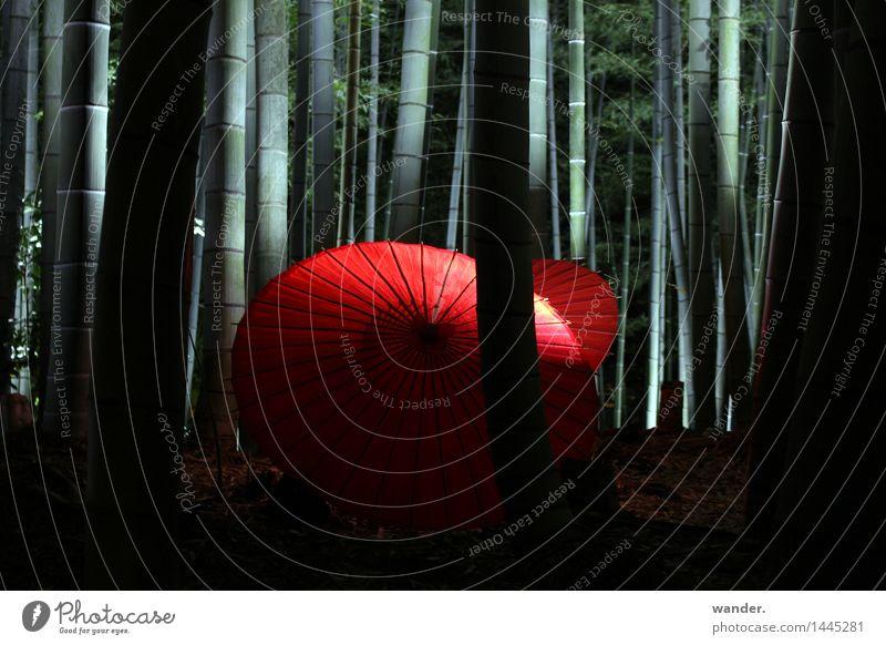 Bambuswald mit Papier-Schirm, Japan Ferien & Urlaub & Reisen Tourismus Ausflug Ferne Kunst Kultur Veranstaltung Natur Pflanze Sommer Herbst Baum exotisch Garten
