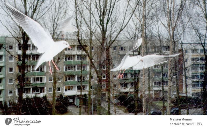 Möwen im Flug weiß Fenster Luftverkehr