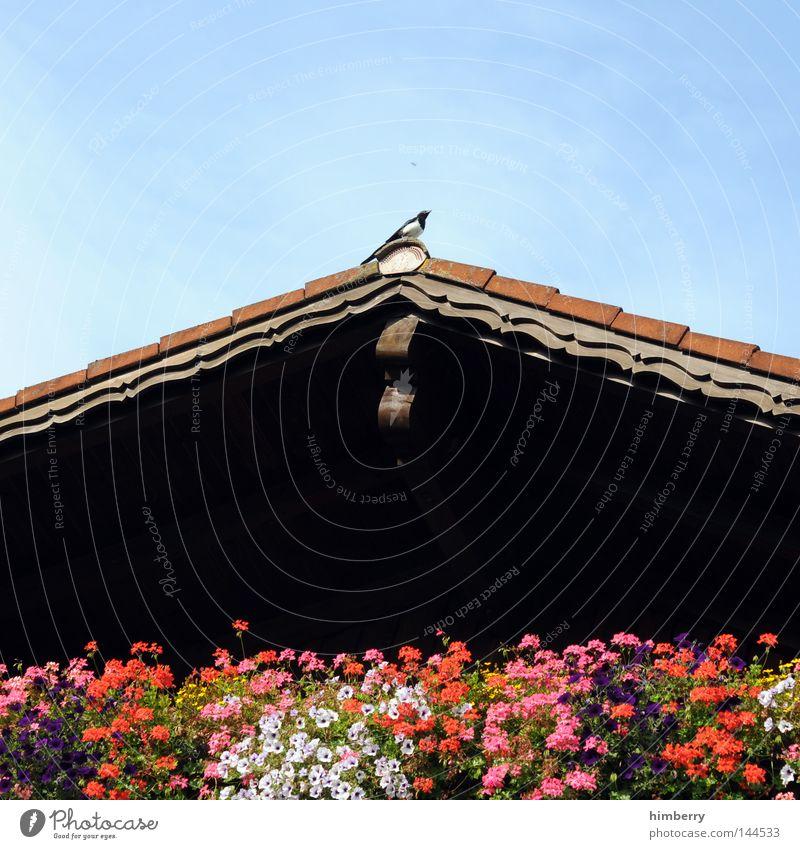 500 und pause Allgäu Bayern Deutschland Kultur Blume Hütte Dach Blumenkasten Elster Vogel Gebäude Aussicht Blick Holzhaus Balkon Ferien & Urlaub & Reisen Sommer