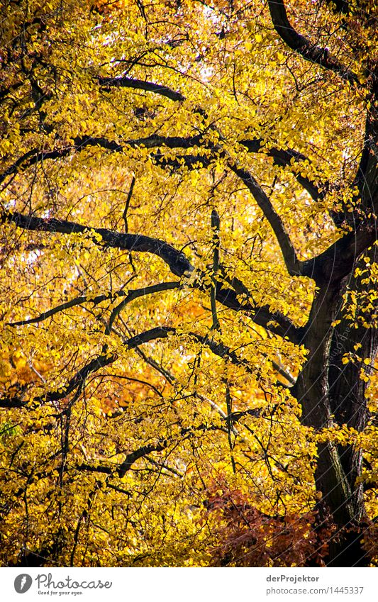 Der Herbst ist gelb Natur Ferien & Urlaub & Reisen Pflanze Baum Landschaft Blatt Ferne Wald Umwelt Park Tourismus wandern Ausflug Schönes Wetter Spaziergang