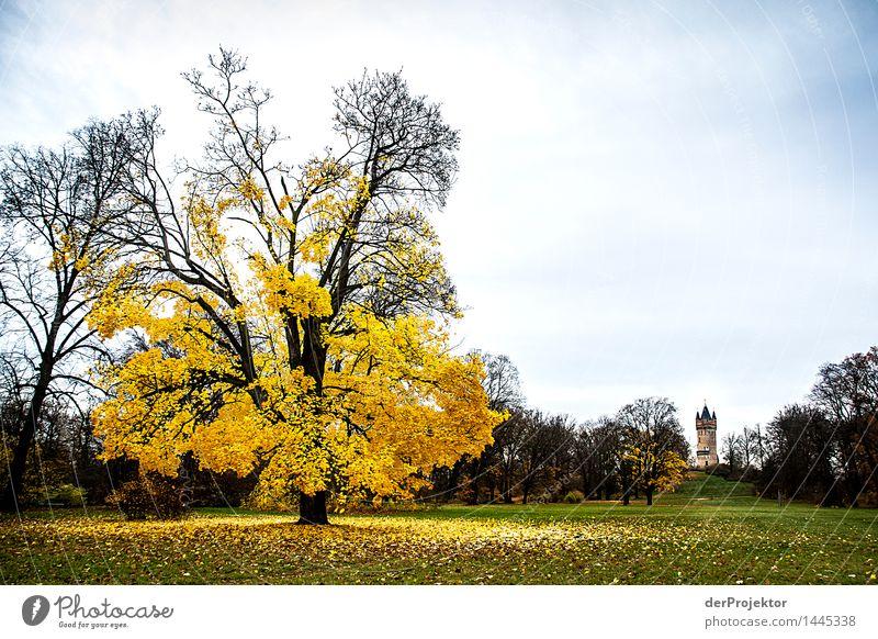 Der Herbst war da Natur Ferien & Urlaub & Reisen Pflanze Baum Landschaft Tier Freude dunkel Umwelt Gefühle Wiese Garten außergewöhnlich Freiheit Park