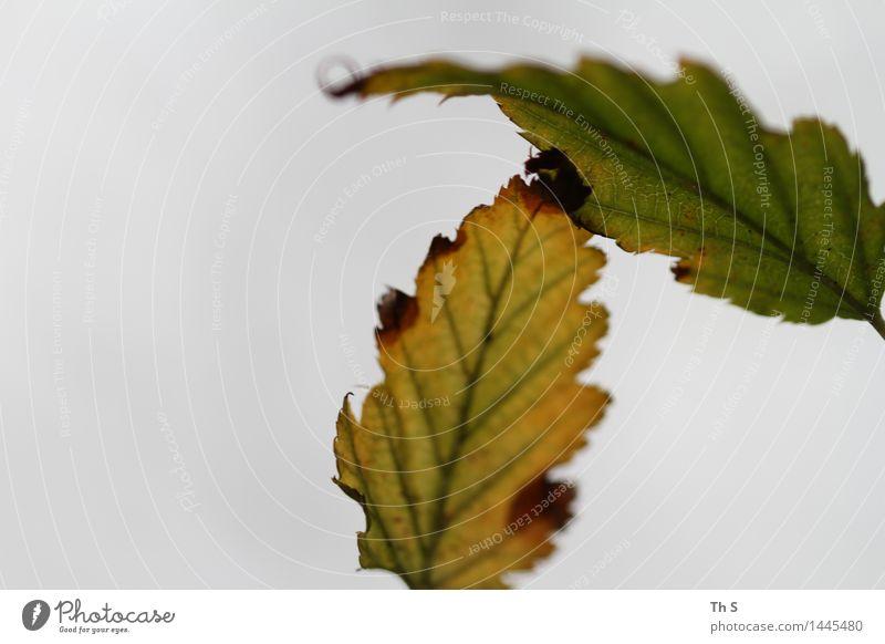 Blatt Natur Pflanze grün rot ruhig Winter gelb Herbst natürlich grau braun elegant authentisch ästhetisch Blühend