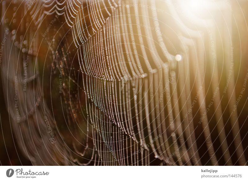 altweibersommer Natur Wasser Tier Wassertropfen Netzwerk Kommunizieren Telekommunikation Netz Insekt fangen Verbindung Computernetzwerk Tau Falle Informationstechnologie Spinne