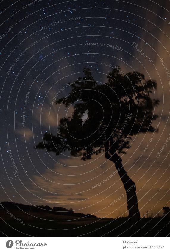 dresden bei nacht Baum Umwelt Landschaft Himmel Wolken Wald Sehenswürdigkeit Wahrzeichen Denkmal hoch Lichtschein Lichtstrahl Schlosspark Burg oder Schloss