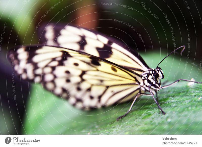 schwarz weiß Natur Pflanze Tier Baum Sträucher Blatt Garten Park Wiese Wildtier Schmetterling Tiergesicht Flügel Beine Fühler 1 beobachten Erholung fliegen