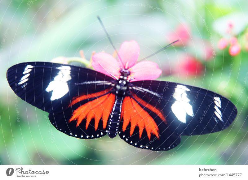 prachtvoll Natur Pflanze Tier Frühling Sommer Schönes Wetter Blume Blatt Blüte Garten Park Wiese Wildtier Schmetterling Flügel 1 beobachten Erholung fliegen