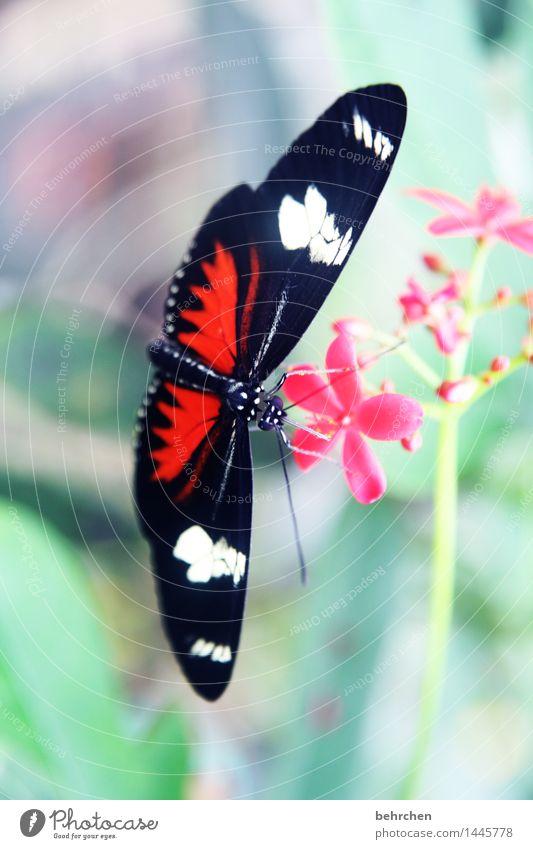 angeklebt Natur Pflanze Tier Frühling Sommer Schönes Wetter Blume Blatt Blüte Garten Park Wiese Wildtier Schmetterling Tiergesicht Flügel 1 beobachten Blühend