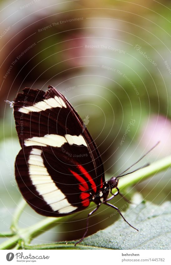 verletzt Natur Pflanze schön Sommer Baum Erholung Blatt Tier Frühling Wiese klein außergewöhnlich Beine Garten fliegen Park
