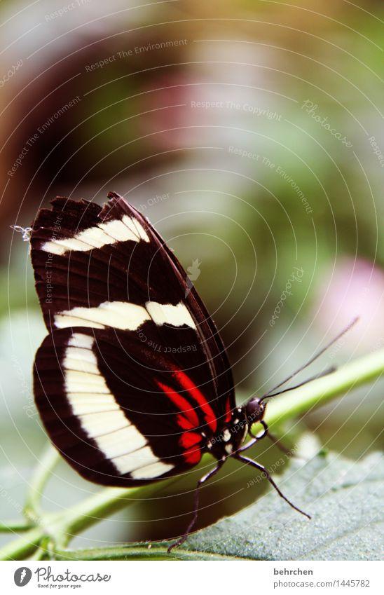 verletzt Natur Pflanze Tier Frühling Sommer Schönes Wetter Baum Sträucher Blatt Garten Park Wiese Wildtier Schmetterling Tiergesicht Flügel 1 beobachten