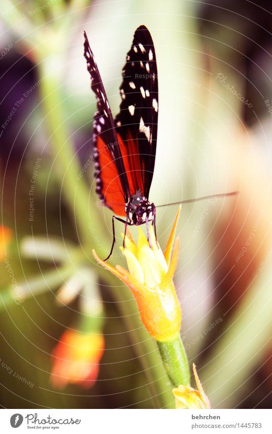 lecker schmecker Natur Pflanze schön Blume Blatt Tier Blüte Wiese Beine außergewöhnlich Garten fliegen Park elegant Wildtier Flügel