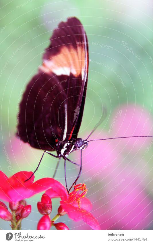 staubsauger Natur Pflanze schön Blume Blatt Tier Blüte Wiese Beine Garten außergewöhnlich fliegen Park elegant Wildtier Flügel