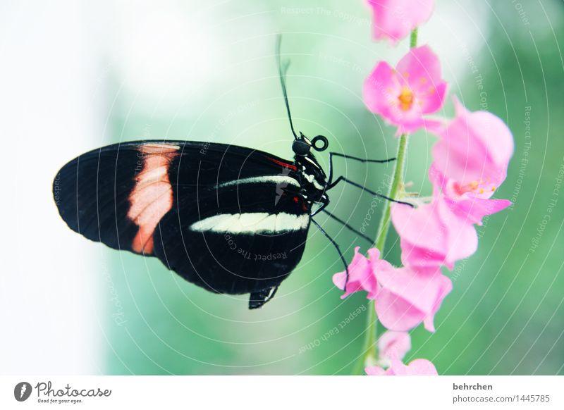 niemals aufgeben! Natur Pflanze grün schön Sommer Blume Erholung Tier schwarz Blüte Frühling Wiese Garten außergewöhnlich Beine fliegen