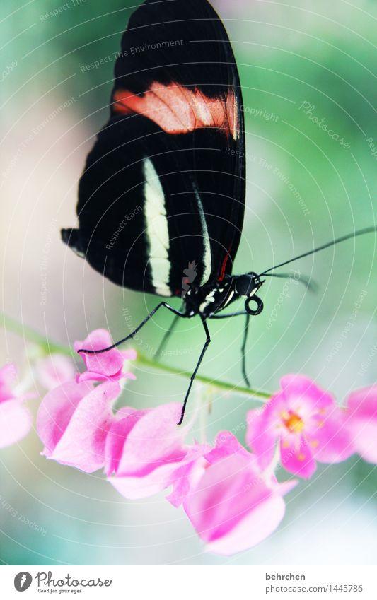 traumtänzer Natur Pflanze Tier Frühling Sommer Schönes Wetter Blume Blüte Stengel Garten Park Wiese Wildtier Schmetterling Tiergesicht Flügel Beine Fühler