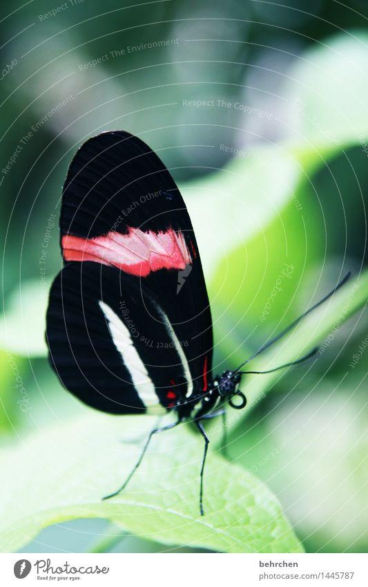 postbote Natur Pflanze Tier Frühling Sommer Baum Sträucher Blatt Garten Park Wiese Wildtier Schmetterling Tiergesicht Flügel Facettenauge Fühler Rüssel Beine 1