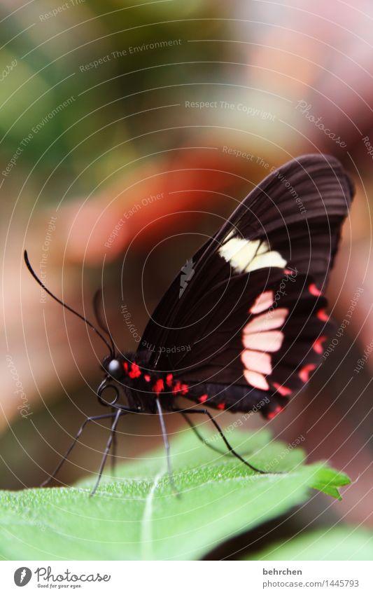 schmetterling am morgen... Natur Pflanze schön Baum Erholung Blatt Tier Auge Wiese Beine außergewöhnlich Garten fliegen Park elegant Wildtier