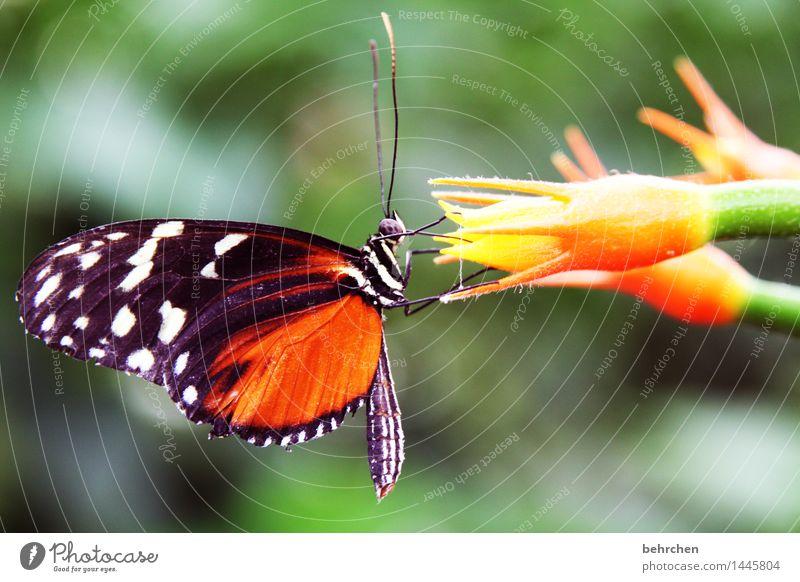 mahlzeit! Natur Pflanze Tier Blume Blüte Stengel Garten Park Wiese Wildtier Schmetterling Tiergesicht Flügel Fühler Rüssel Facettenauge 1 beobachten Blühend