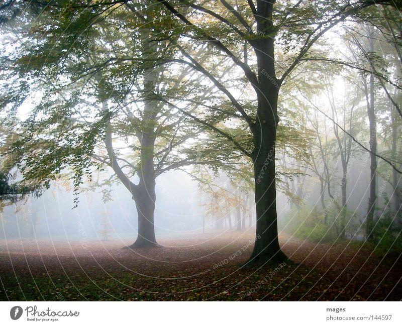 Morgennebel Baum Sonne Blatt Wald Herbst Nebel feucht diffus Herbstwald