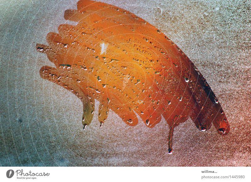 herbst. inkognito. | helgiland II kalt orange Wetter Glas Wassertropfen Reinigen Klarheit Fensterscheibe Fensterblick Klimawandel Durchblick Herbstfärbung