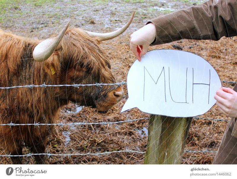 Muh Wiese braun Feld Kuh stachelig