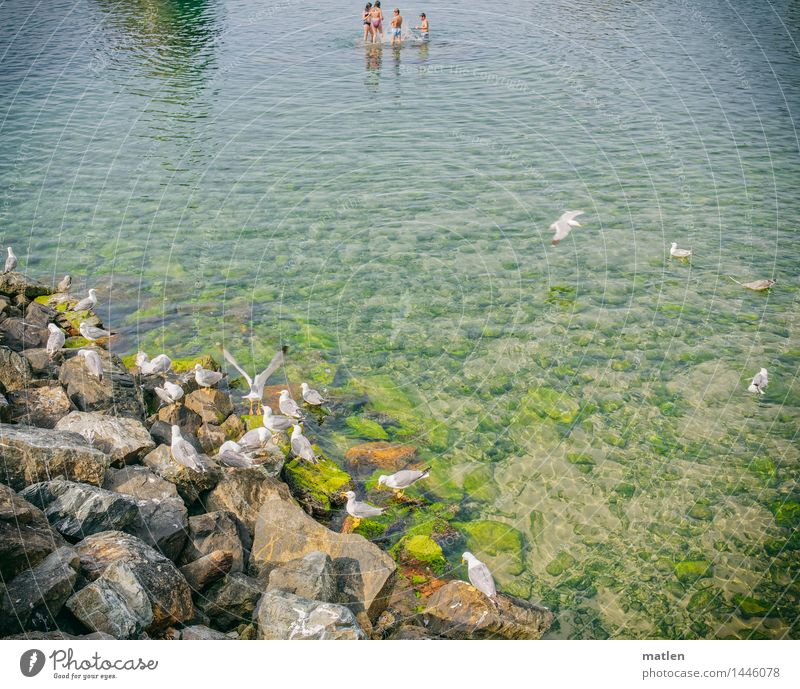 Freibad Mensch Kind 4 3-8 Jahre Kindheit Tier Wildtier Schwarm Schwimmen & Baden fliegen blau braun grün weiß Möwe steinig Farbfoto Außenaufnahme
