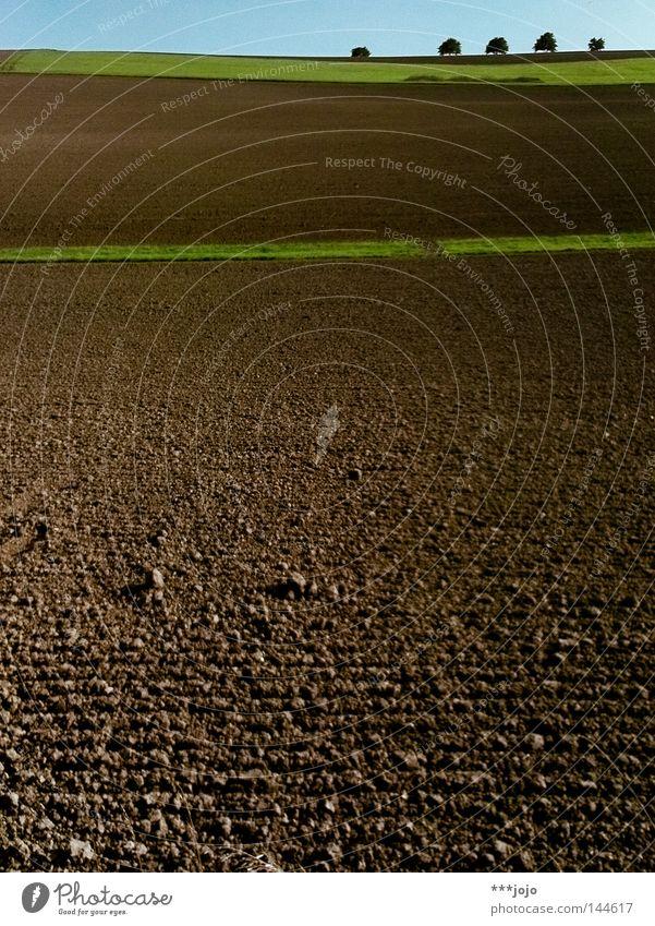 ruralgeometrie I. Natur Baum Herbst Wiese braun Feld Erde Landwirtschaft Amerika Geometrie Furche Allee Argentinien Schlamm ländlich