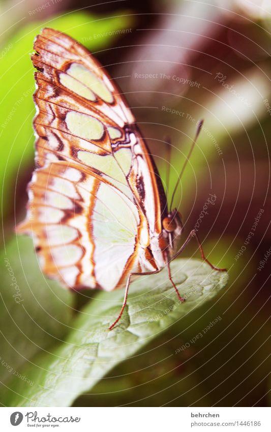 schmetterling Natur Pflanze Tier Baum Sträucher Blatt Garten Park Wiese Wildtier Schmetterling Tiergesicht Flügel Beine Fühler Facettenauge 1 beobachten