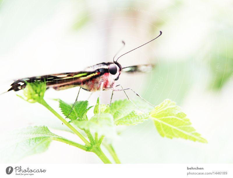 FLAUSCHIGer rücken kann auch entzücken Natur Pflanze Tier Sommer Baum Sträucher Blatt Garten Park Wiese Wildtier Schmetterling Tiergesicht Flügel Fell Beine