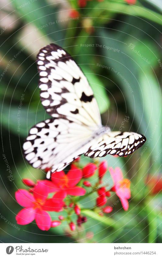 herzchen:) Natur Pflanze Tier Blume Blatt Blüte Garten Park Wiese Wildtier Schmetterling Flügel Weiße Baumnymphe 1 beobachten Blühend Duft fliegen Fressen