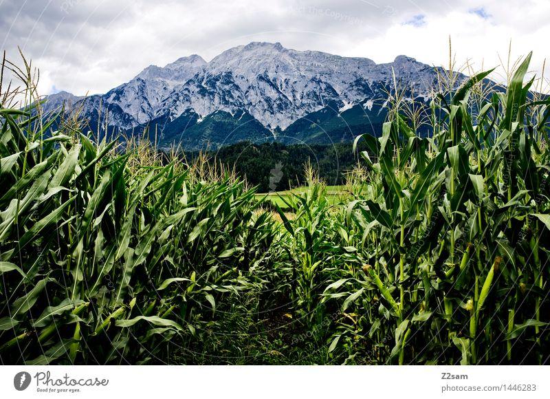Durchblick Natur Landschaft Wolken Sommer Klima Klimawandel schlechtes Wetter Nutzpflanze Maisanbau Alpen Berge u. Gebirge Gipfel bedrohlich dunkel nachhaltig
